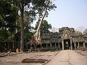 金色吳哥之旅2007.2.16:塔普倫寺090