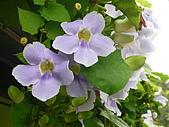 花花世界:113