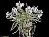 003:其他花卉-0415.jpg