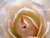 003:其他花卉-0410.jpg