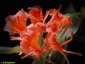 003:其他花卉-0426.jpg