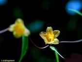 002:其他花卉-0262.jpg