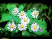 002:其他花卉-0265.jpg