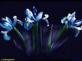 002:其他花卉-0254.jpg