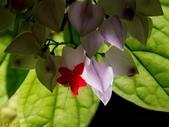 002:其他花卉-0259.jpg