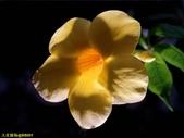 002:其他花卉-0260.jpg