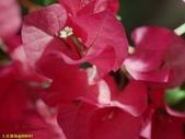 002:其他花卉-0258.jpg