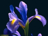 002:其他花卉-0247.jpg