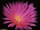 003:其他花卉-0422.jpg