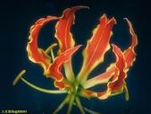003:其他花卉-0424.jpg