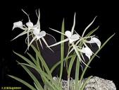 003:其他花卉-0414.jpg