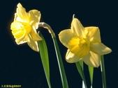 002:其他花卉-0252.jpg