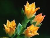 002:其他花卉-0253.jpg