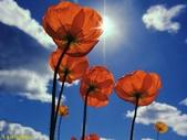 002:其他花卉-0250.jpg