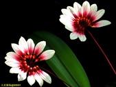 002:其他花卉-0256.jpg