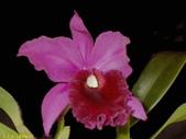 003:其他花卉-0412.jpg