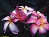 002:其他花卉-0249.jpg
