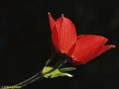 002:其他花卉-0255.jpg