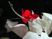 002:其他花卉-0257.jpg