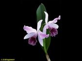 002:其他花卉-0248.jpg