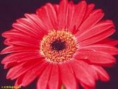 003:其他花卉-0420.jpg