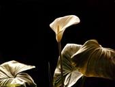 002:其他花卉-0263.jpg