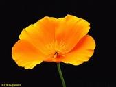 002:其他花卉-0264.jpg
