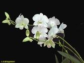 003:其他花卉-0418.jpg