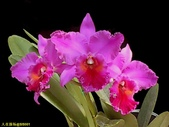 003:其他花卉-0411.jpg