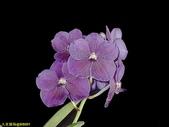 003:其他花卉-0416.jpg