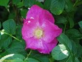 003:其他花卉-0559.jpg