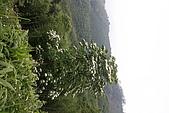 361新竹縣、五峰:20080517_057.JPG