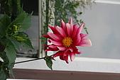 361新竹縣、五峰:20080517_073.JPG