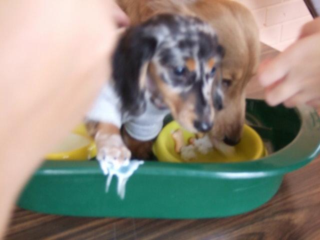 20080224- 我的狗&寶新:DSCF4884.JPG