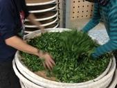 2013年春茶採買紀錄:IMG_0501.JPG