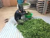 2013年春茶採買紀錄:IMG_0498.JPG
