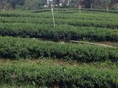 2013年春茶採買紀錄:IMG_0415.JPG