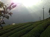 2013年春茶採買紀錄:IMG_0354.JPG