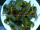 『斟茶緣』2013年霧社冬茶~ :6.jpg