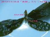 【斟茶緣】2013年杉林溪 『軟鞍冬片』:9.jpg