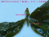 【斟茶緣】2013年杉林溪 『軟鞍冬片』:10.jpg