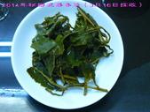 【斟茶緣】2014年秘密武器春茶(3月16採製):5.jpg