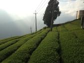 2013年春茶採買紀錄:IMG_0353.JPG