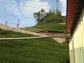 2013年春茶採買紀錄:IMG_0355.JPG