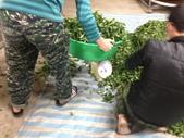 2013年春茶採買紀錄:IMG_0499.JPG