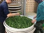 2013年春茶採買紀錄:IMG_0503.JPG