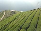 2013年春茶採買紀錄:IMG_0356.JPG