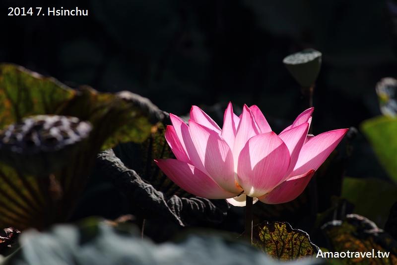 新竹人工湖:IMG_7783.jpg