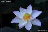 新竹人工湖:IMG_7804.jpg