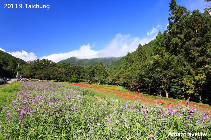 武陵露營:IMG_1837.jpg